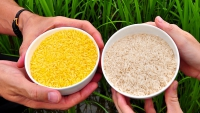 http://www.allowgoldenricenow.org/the-case-for-golden-rice